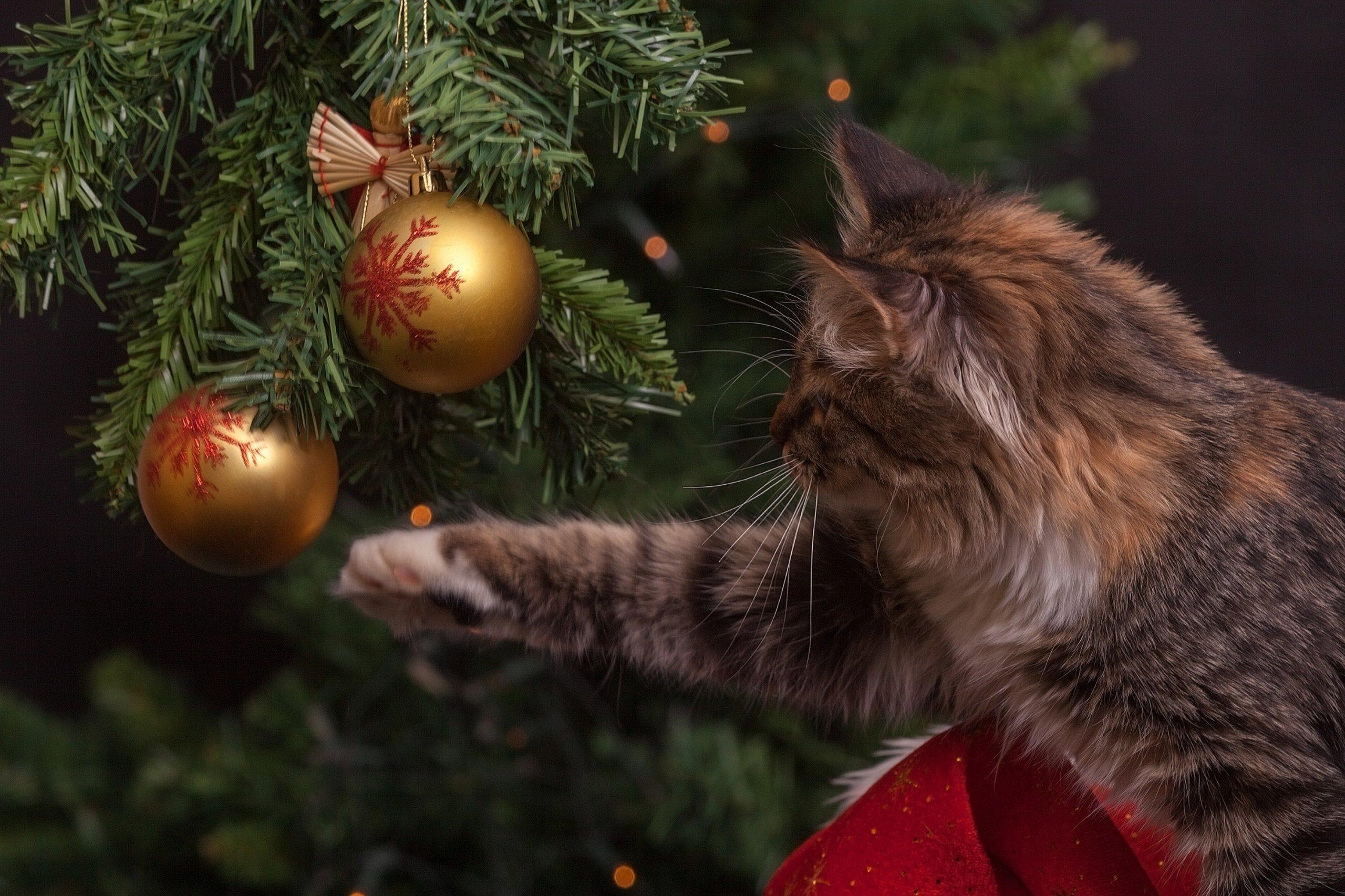 ball-blur-cat-236586.jpg