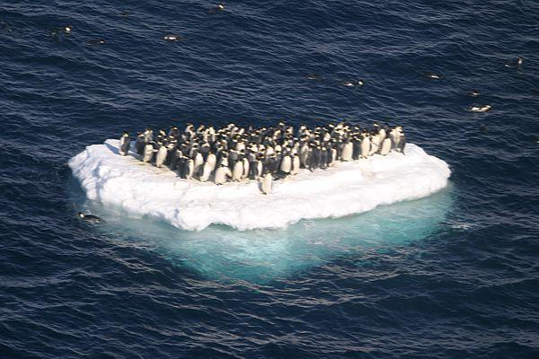 love boat penguin style.jpg