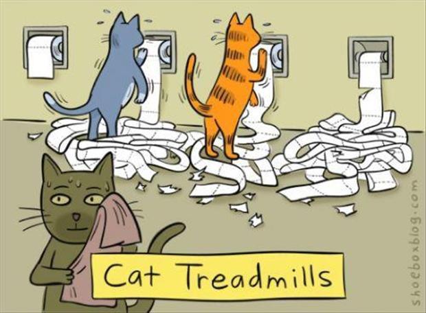 funny-cat-comics.jpg