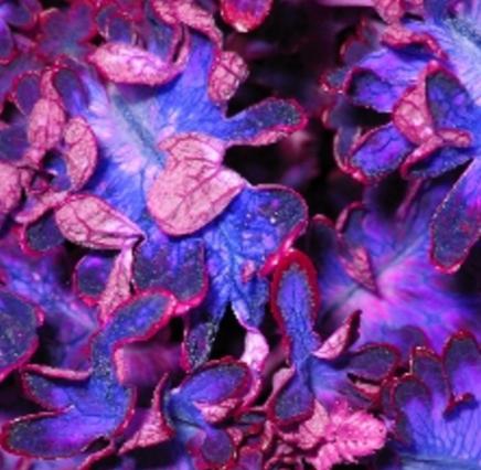 purple leaf background.png
