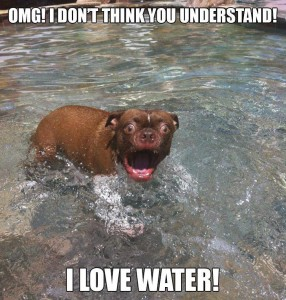 Funny-dog-I-love-water-286x300.jpg