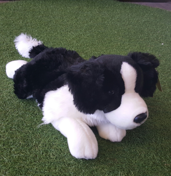 Weighted-Border-Collie-1.png