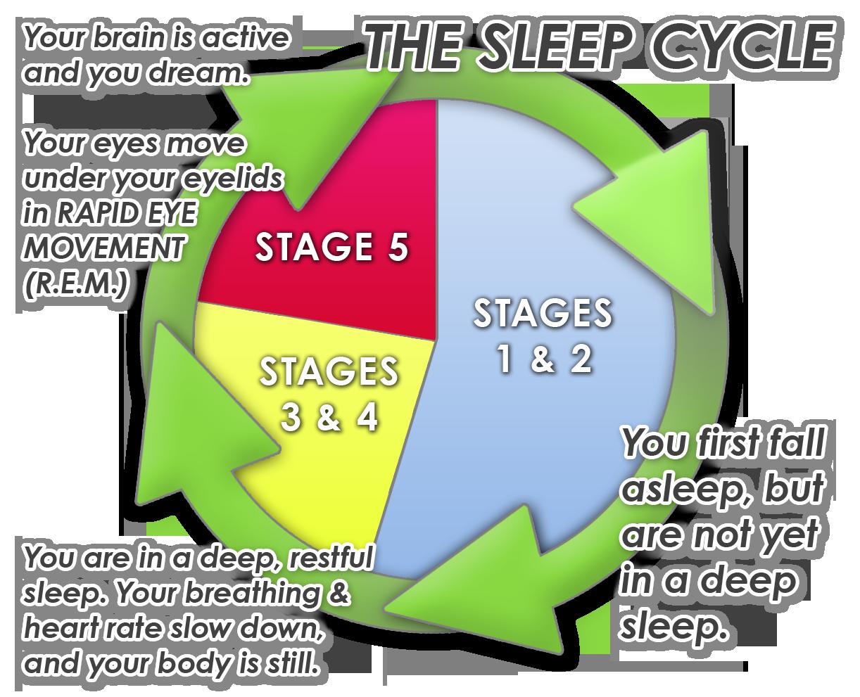 Sleep-cycle-graphic.png