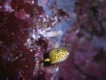 bumblefish.jpg